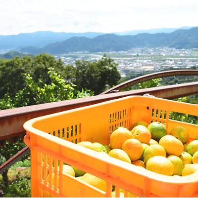 原料はすべて「和歌山県産」